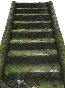 Mossy stairs that with pressure washing nanaimo could look brand new again.
